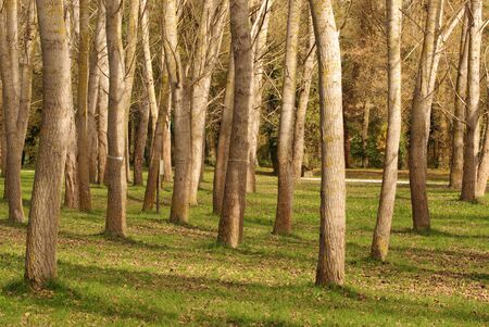 grove of trees in spring