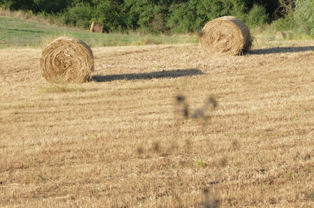 do not trust all of the hay bales