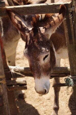 ass christmas: donkey
