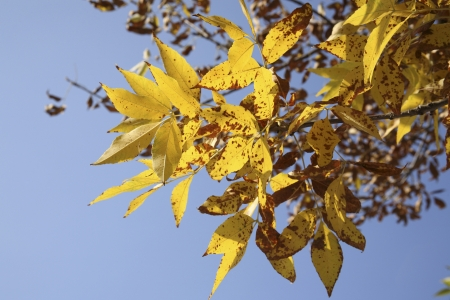 yellow leaves, autumn