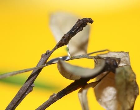 잎의 매크로 이미지와 물 방울 스톡 사진