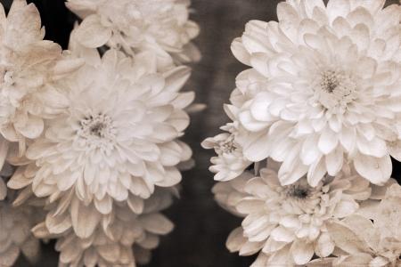 artwork  in retro style,  chrysanthemum