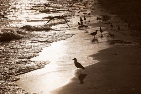 artwork in retro style, sea and seagulls