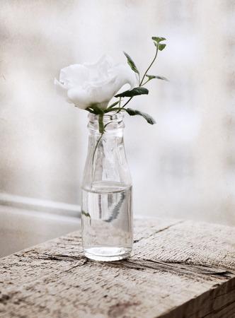 tender tenderness: Artwork  in painting  style,  white flower