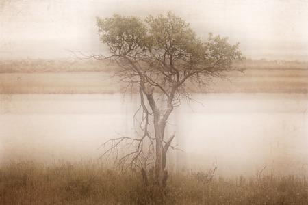 Artwork in retro style tree near the river Stock Photo