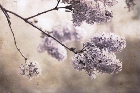 Artwork in retro style,  lilac