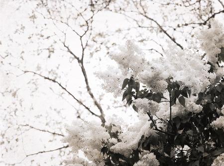 Artwork in retro style, white  lilac