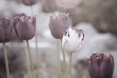 Artwork in retro style,  tulips
