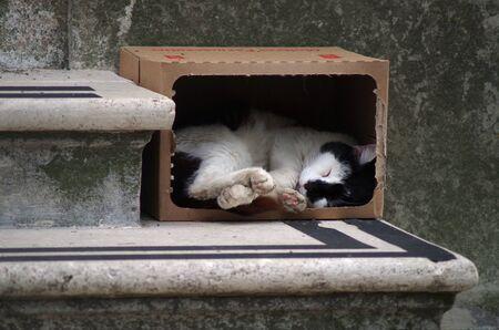 a cat sleeping in a carton box