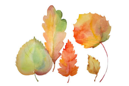 Set of four autumn leaves of different types of trees. The illustration is on white paper, the leaves are isolated from each other, but make up an integral composition in yellow-orange and red colors. Imagens