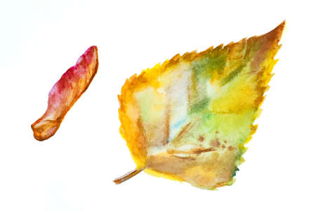 Set of autumn birch leaf and maple seeds.