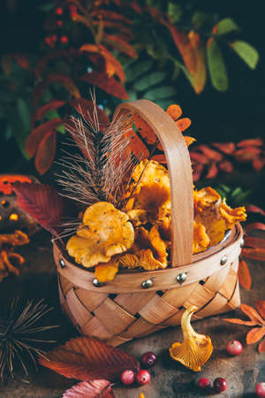 Chanterelle mushrooms and autumn leaves in a wicker basket on a dark wooden background. Concept of fall season. Golden autumn card.