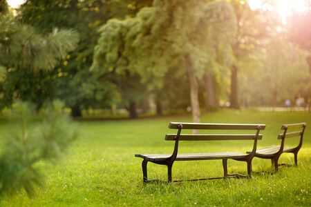 Wooden benches in beautiful park, in summer