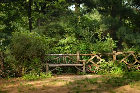 Wooden bench in beautiful park, in summer