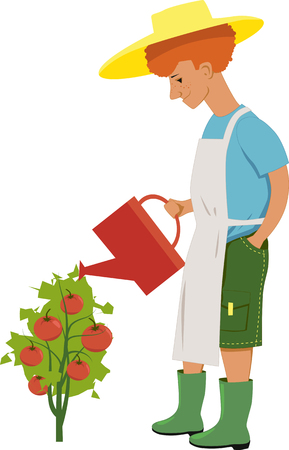 Young redheaded gardener watering a tomato plant with ripe tomatoes, vector cartoon, isolated on white