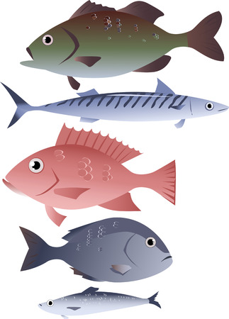 Popular species of commercially harvested fish, including bass, mackerel, snapper, tilapia and herring Illustration