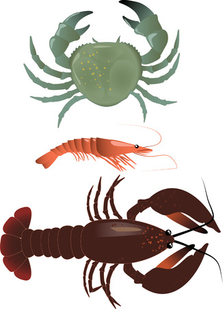 Realistic vector illustration of Crustaceans: a crab, c shrimp and a lobster
