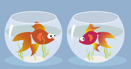 fishtank: Cartoon goldfish smitten by a girl fish sitting in the another fishbowl, vector illustration Illustration