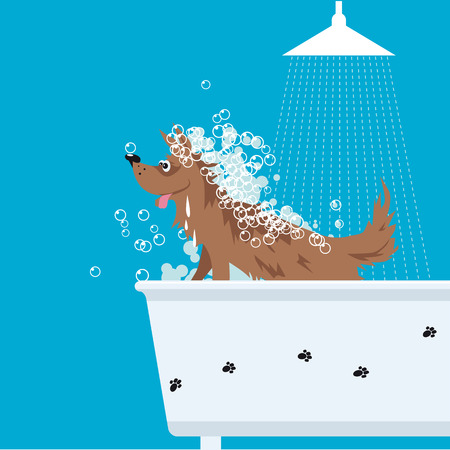 Cute dog sitting in a bath tub at groomer, covered in foam