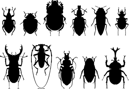 scarab: Detailed illustration bugs and beetles isolated in a flat style on white background. Insects: scarab beetle, stag beetle, beetle rhinoceros, longhorn beetle, beetle bug, ladybug, weevil beetle.