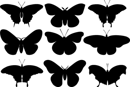 proboscis: Detailed illustration butterflies isolated in a flat style on white background. Collections of insects: butterflies.