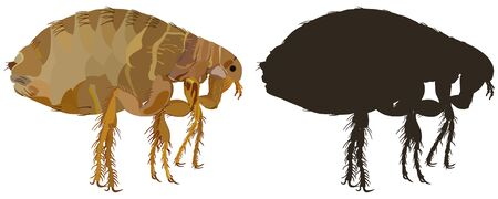 A flea-insect pest. Insects are parasites. Vector illustration.
