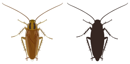 Vector image of a colored cockroach and its black silhouette on a white background. Illustration