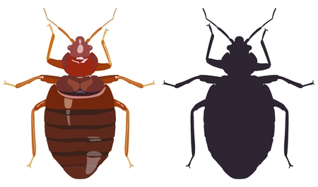 Bedbug and his black silhouette on white background. Vector illustration.