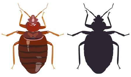 Bedbug y su silueta negra sobre fondo blanco. Ilustración del vector.
