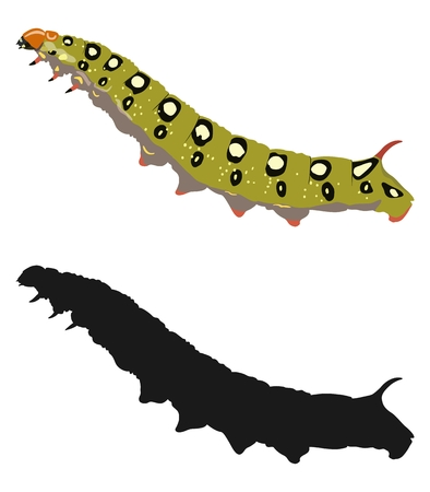 Bright image of the caterpillar and its silhouette. Vector illustration.