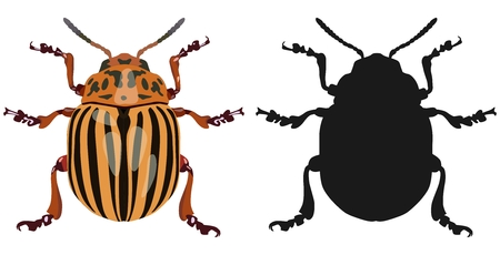 leaf logo: Color image of Colorado beetle and its silhouette. Vector illustration.