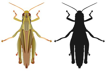 Color image of grasshopper and its black silhouette. Vector illustration. Stock Photo