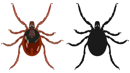 transmissible: Color image of the tick and its silhouette. Vector illustration. Stock Photo