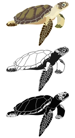 Color image of sea turtle and black and white silhouettes. Illustration