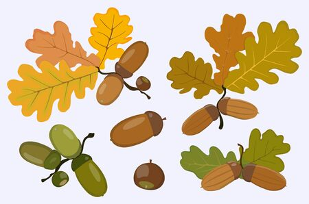 Vector image of ripe and green acorns icons and oak leaves of yellow, green and brown flowers isolated on white background.