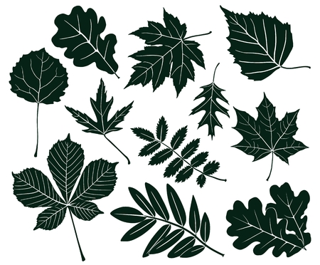 Collection of silhouettes of maple leaves, chestnut, aspen, oak, and mountain ash.