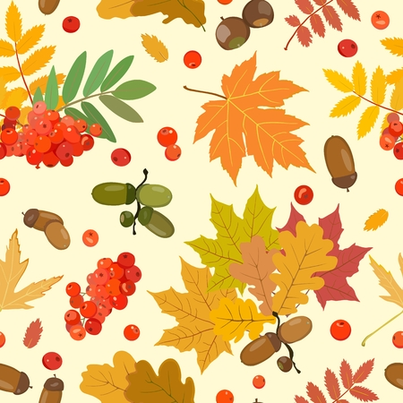 Vector pattern with multi-colored leaves of oak, maple, ash, rowan and ripe acorns and berries of mountain ash