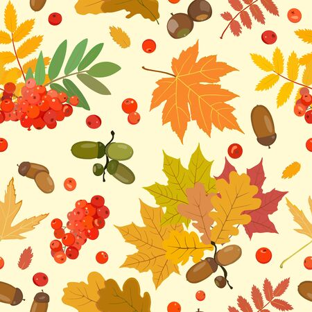 Vector pattern with multi-colored leaves of oak, maple, ash, rowan and ripe acorns and berries of mountain ash. Nuts and berries. Stock Photo