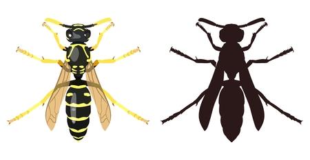 말벌과 그 실루엣의 컬러 이미지입니다. 벡터 일러스트입니다. 일러스트