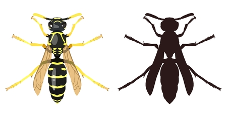 Color image of wasp and its silhouette. Vector illustration. Illustration