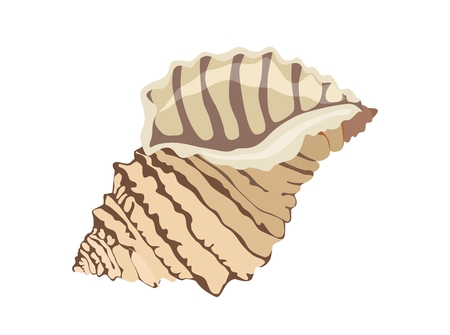 Colorful tropical sea shell. Vector illustration Standard-Bild - 97706551