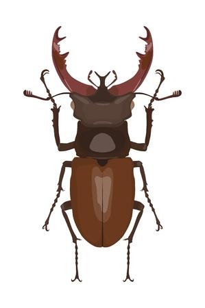Detaillierte Bild von Hirsch Käfer . Vektor-Illustration Standard-Bild - 98779887