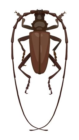 Detailed beetle barbel, top view. Vector illustration Standard-Bild - 99132394