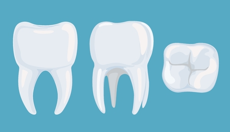 Vector image of a healthy root tooth on a blue background from different angles. External structure of a healthy tooth. Standard-Bild - 98976359