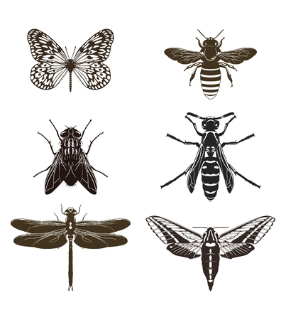 Vector set of butterfly silhouettes, fly, bee, wasp, dragonfly and moth isolated on white background. Insects. Standard-Bild - 99272654