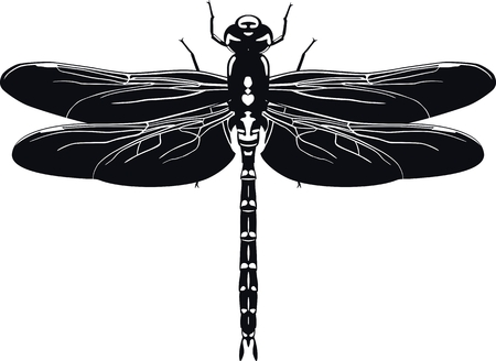 Schwarze Silhouette der Libelle auf weißem Hintergrund . Vektor-Illustration Standard-Bild - 99419740