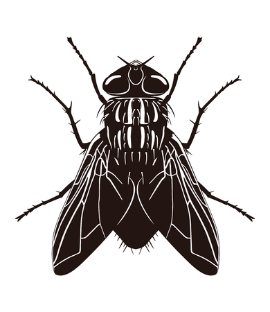 Dark silhouette of fly. View from above. Vector illustration Ilustracje wektorowe