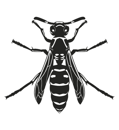 Vector silhouette wasp, isolated on white background. Flying insects. Template.