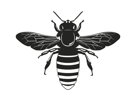 Image of the bee silhouette. View from above. Vector illustration. Standard-Bild - 101246434