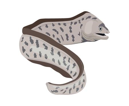 Image vectorielle de poisson murène en forme de serpent sur fond blanc. Poisson de l'océan en colère.
